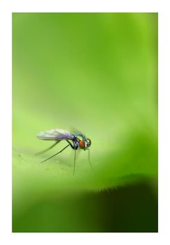 fly on green by sergiemag