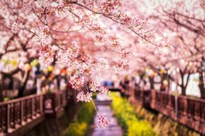 Burst of Spring by aaronchoiphoto
