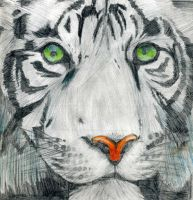 White Tiger by Wyldfire7