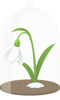 Snowdrop flower protected by TechRainbow