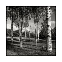 Some trees by 2jL