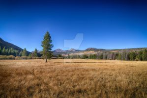 Lone Pine and the Meadow by mjohanson