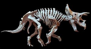 triceratops step 10 by hannay1982