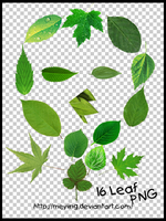 PNG / leaf 16P by Meyiing