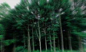 a chorus of tree by fotomademoiselle