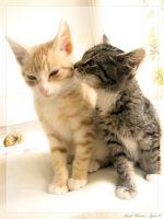 Sweet Kisses . . . by Q-tipper