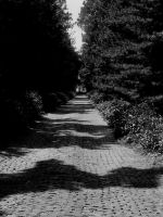 Follow The Black Brick Road? by Cheeseface101