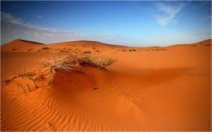 Desert II by waleed-DP