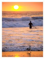 the surfer and the seagull by MrVERTIGO