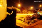 Street Lights. . . by Fuez