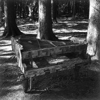 the piano in the woods by crh