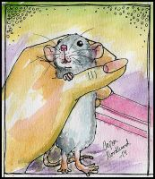 Baby rat in human hand 2 by cajsa