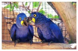 The Blue Parrots by frienkink