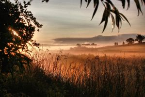 morning mist by Tiger--photography