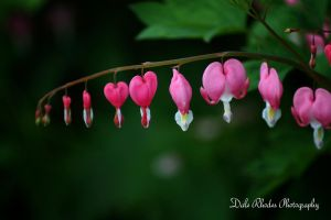 Flower 71 by DalePhotography