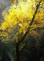 Magical tree in yellow by TinyWild