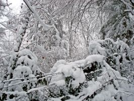 Snowy Barbed Wire by Risen-From-The-Ruins