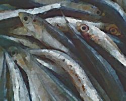 anchovies by ChaelMontgomery