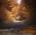 the colours of autumn by groundhog-day