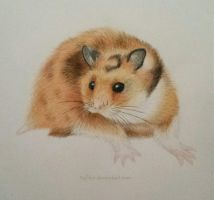 Syrian hamster by Safikei