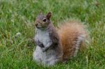 Squirrel Stock 5 by SabrinaFranek