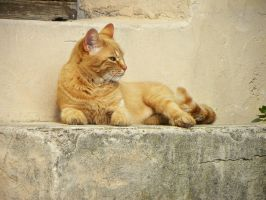 Serenita del gatto 3 by Flore-stock