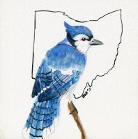 Birds of Ohio: Blue Jay by alice-time