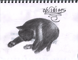 My Cat, Obsidian by DrahcirII