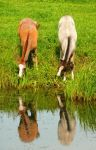 Two foals at the ditch by jchanders