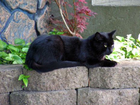 Black Cat by photowizard