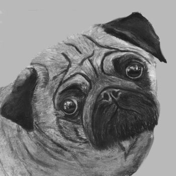 Pug by Zozzy777