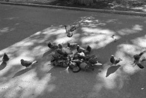 Pigeon Social In the Park 9 by Miss-Tbones