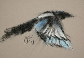 magpie 7.11 1 by jrlincoln9