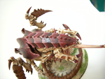 tyranid mawloc feathering by the-Higgins