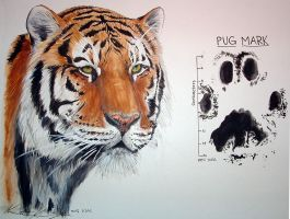 Tiger Assignment finished by spiralkitty
