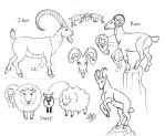 Draw Ram Ibex Sheep Goat by Diana-Huang