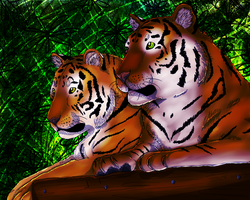 .:The True Kings Of The Jungle:. by graciegra