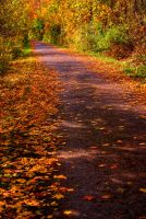 Path in to the Autumn by Qels