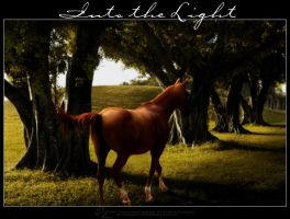 Into The Light by greenleaf-imagery