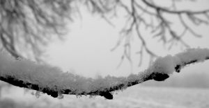 Under the snow VII by Mayiaaa