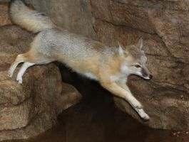 Swift Fox Flight by Jack-13