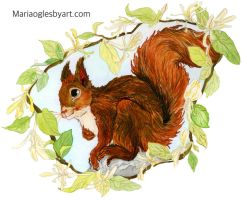 Red Squirrel by maria12256