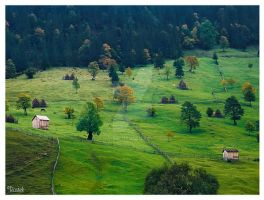 Piece of green Romania by Aga-Ro