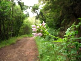 A flower in the road by Trablete
