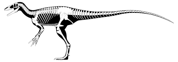 Composite Megaraptorid Reconstruction (OUTDATED) by PWNZ3R-Dragon