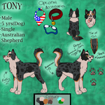Tony Reference Sheet by KTPPaws143
