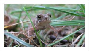 Toad 2 by MichelleMarie