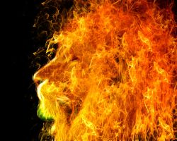 fire lion by Bojan1558