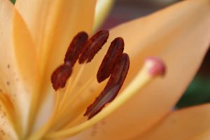 Stamen Gather by mehheidi
