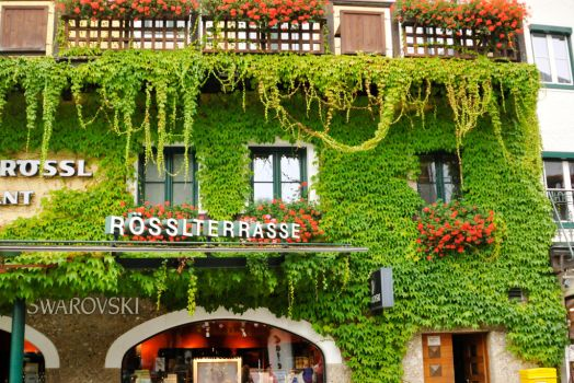 Vine covered building 1 - St Wolfgang by wildplaces